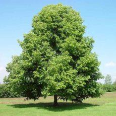 Etat avancement opération parrainez un arbre
