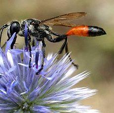 Insectes de nos jardins