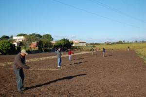 Calade semis engrais vert oct 10